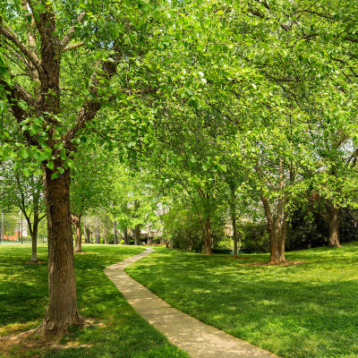 Strawberry Hill tree-lined walkway